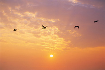Birds sunrise