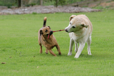 Tug of war a